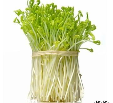 L'Alfalfa – Erba Medica (Medicago sativa) Fastidi legati alla menopausa, unghie e capelli fragili….