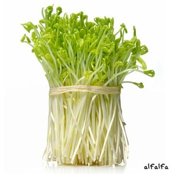 L'Alfalfa 4